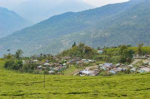 Spend your weekend in the midst of ONLY Tea garden in Sikkim