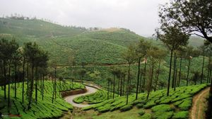 God's own country ... The Kerala !