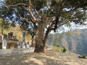 Sahlam- The legend Of Indians Worshipping A Tree With Human Heads