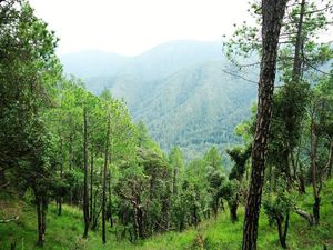A Trek to Get the Most Fantastic View of the Mountains in Kumaon: Budha Pinath