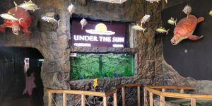 UDAIPUR : UNDER THE SUN FISH AQUARIUM