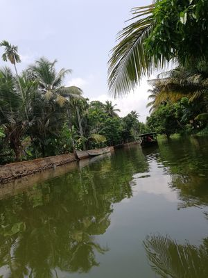 Through Kerala's backwaters!