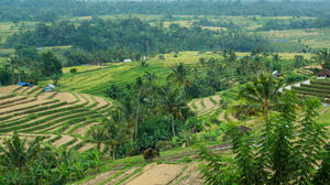 Jatiluwih Rice Terraces, , Indonesia: View Images, Timing