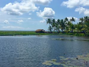 Floating on the serene backwaters of Kerala!