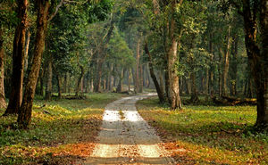 The majestic Gorumara National Park – a gem in the East