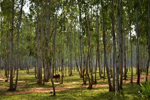 The cultural hamlet on red soil – Shantiniketan