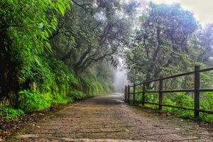 Landour- An utopia of magical boulevards and floating poetries