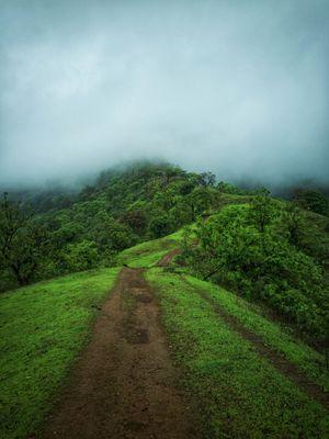 Jungle trek to Matheran #onetreehill