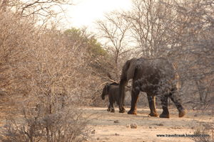 SA road trip (1): Towards and in Kruger Park