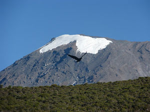 Trek up the Kilimanjaro