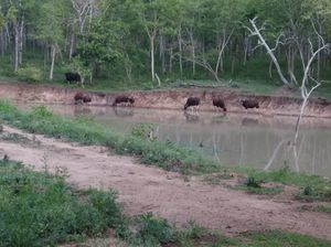 A trip to Kabini's wilderness!!