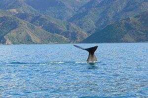 Encounter Kaikoura (Dolphin Encounter) 1/1 by Tripoto