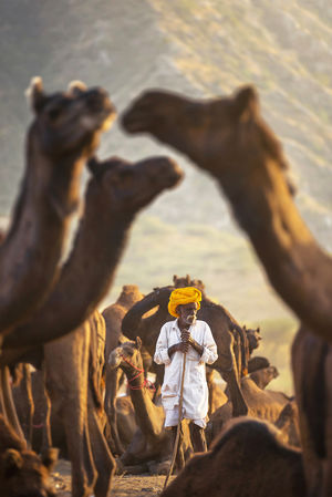 My Camel My Shield  #BestTravelPictures #tripoto #rajasthan #Pushkar #India #camelfair
