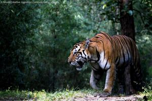 Ranthambore National Park Opens Again for the Tiger Spotting after Monsoon Closing for 3 Months
