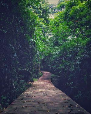 A lesser known gem of Tripura : Tepania Eco Park