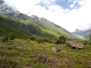 Trekking Valley of Flowers in 4 days and under 3000 | Paradise in Uttarakhand