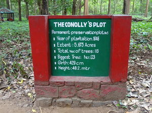 Conolly's Plot 1/undefined by Tripoto