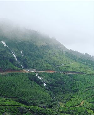 From the land of snow bound mountains and tea plantations - Munnar (26/10/2018)