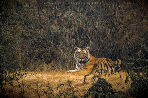 Kabini & Coorg - Unplanned trip of two Photographers from Chennai