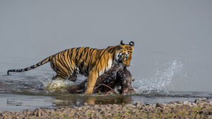 Tadoba Tigers - My First Wildlife Photography Trip