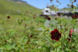 Some Mysteries are Meant to be seen(Prashar Lake)