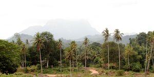 From Kottu To Watalappam - A Culinary Tour Through Sri Lanka