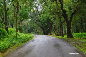 It's Monsoon..Plan a Trip to Chikmagalur.