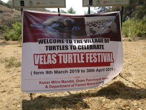 The world of Turtles that I explored.... Velas Turtle Festival #offbeatgetaway