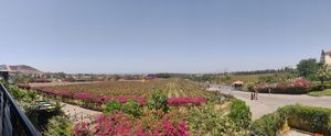 SULA Vineyard, The vine session which I remember ;)