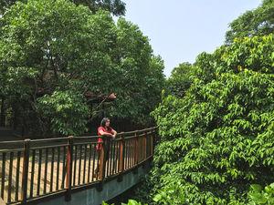 Stay in the wilderness at Vythiri Mist Resort