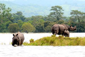 Where to Spot Rhinos in India