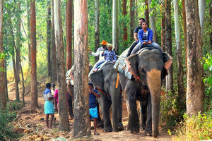 Carmelagiri Elephant Park - Elephant Ride In Munnar
