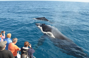 Best Destinations for Whale Watching