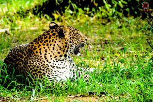 The Garden of Heaven -Nandankanan Zoological Park