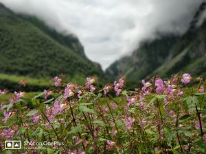 Valley Of Flowers #besttravelpictures #chamoli #uttarakhand
