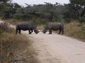 #BestTravelPictures - Wildlife:  Horn OK Please @tripotocommunity