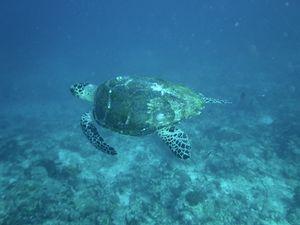 #BestTravelPictures - Wildlife: Turtle power @tripotocommunity