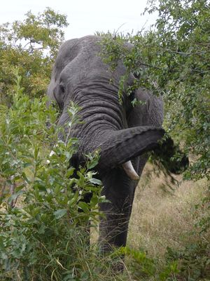 #BestTravelPictures - Wildlife: An elephant can bring good luck, especially when his trunk is up!