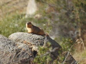 Animals of Ladakh