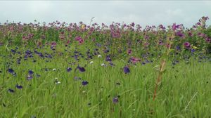 Kaas plateau near PUNE. It became a part of a UNESCO World Natural Heritage Site in 2012.
