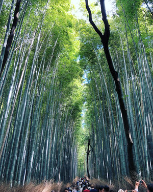 #bambooforest #japan #kyoto #dontsettle #thisview #endlesswalks