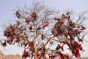 The cloth tree