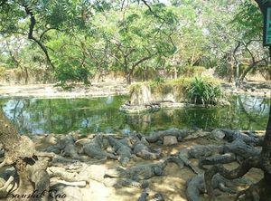 Worlds Largest Reptile Park @ Chennai