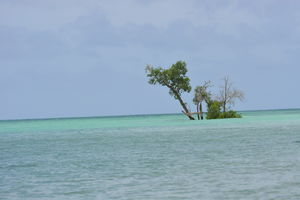 Beautiful Havelock & its Pristine Beaches