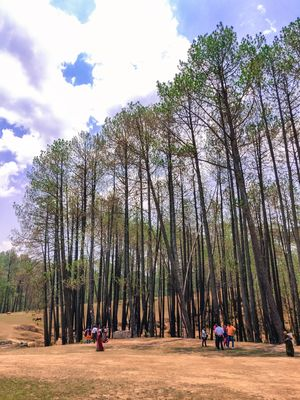 10 Pictures of Ranikhet that will surely urge you to visit this Gem of the Hills #tenphotos