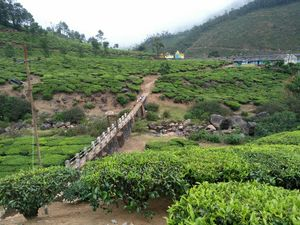 Hill station heaven in Kerala Munnar #Notinnorth