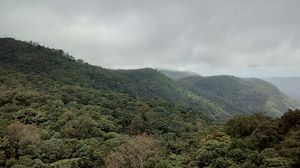 Where the green meets the greenery in Chikmagaluru