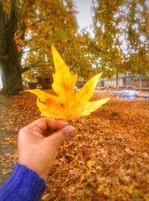 Fall colors of Kashmir - 5 Days in Heaven