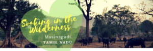 Soaking in Wilderness at the Foothills of the Nilgiris