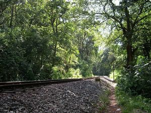 Trek to Dudhsagar Falls [19th - 20th April 2014]